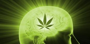 Estudio: El Cannabis Puede Curar la Adicción a las Drogas Duras